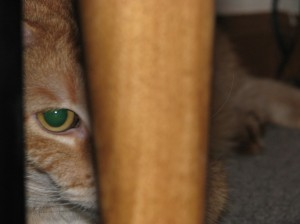 Leo, hiding under a table