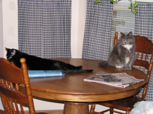 Maus and Haley on the table